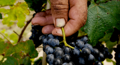 Photo for: An Insider's Look: The Challenges of the Wine Import Business